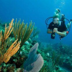 Paket Wisata Snorkeling di Bintan