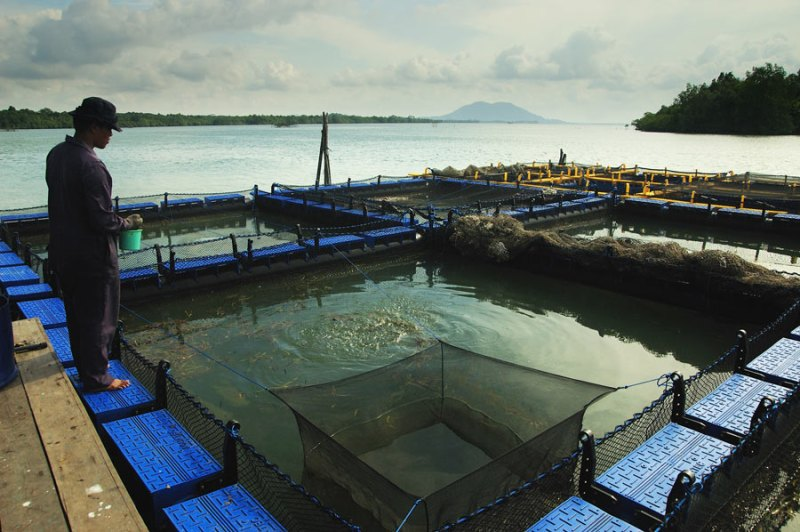 Jalan Jalan ke Sentra Budidaya Ikan Kerapu Pulau Bintan